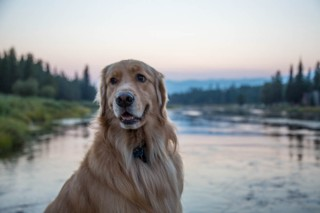 Yellowstone-253