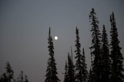 Yellowstone-262